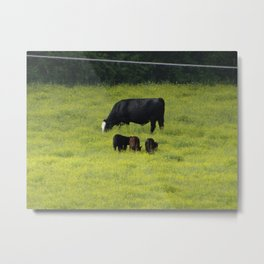 Mama Cow and Her Little Calfs Metal Print