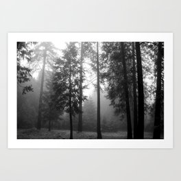 Black and White Forest, Nevada City Art Print