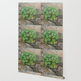 Life on a stone wall Wallpaper