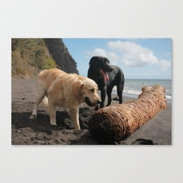 Two dogs playing Canvas Print