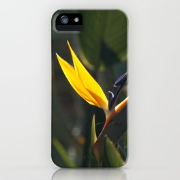 Striking Strelitzia iPhone Case