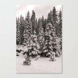 Winter Wonderland - Carol Highsmith Canvas Print