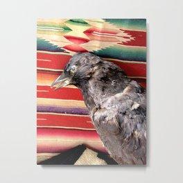 Old crow Metal Print