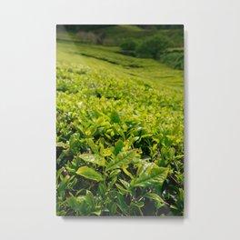 Gorreana tea gardens Metal Print