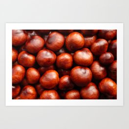 Glossy red conkers in autumn Art Print
