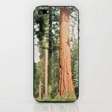Giant Sequoia iPhone & iPod Skin