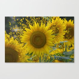 scatterflower  Canvas Print