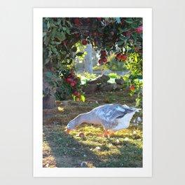 Goose & Old Apple Tree Art Print