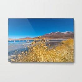 The Contrasting Landscape of Laguna Colorada Metal Print