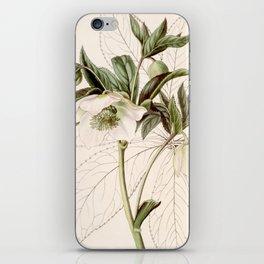 Helleborus orientalis iPhone Skin