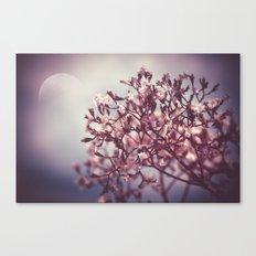 Tender Lights Canvas Print