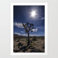 Joshua Tree and Sunshine in Joshua Tree National Park California Art Print