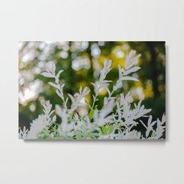 White Oleander Bokeh Metal Print