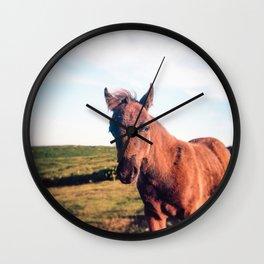 Dartmoor Pony Portrait Wall Clock