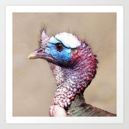 Watercolor Bird, Wild Mirriam's Turkey 04, Dunraven Trail, RMNP, Colorado, Colorful Plummage Art Print