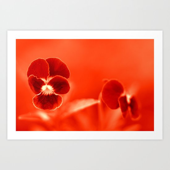 Viola in red 16-55 Art Print