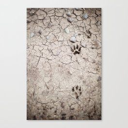 wolf tracks Canvas Print