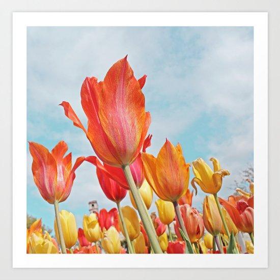 Tulip delight! Art Print