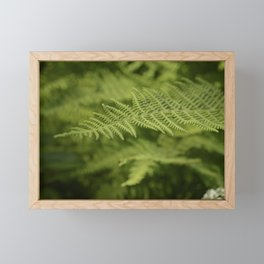Jane's Garden - Fern Fronds Framed Mini Art Print