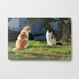 Summer Flirt Cat Fine Art Photography Metal Print