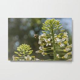 Bee on White 2 Metal Print