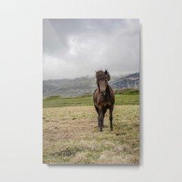 Icelandic Horse Metal Print