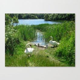 Bosherston Lily Ponds.Pembrokeshire.Wales. Canvas Print