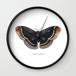 Calleta Silkmoth  (Eupackardia calleta) Wall Clock