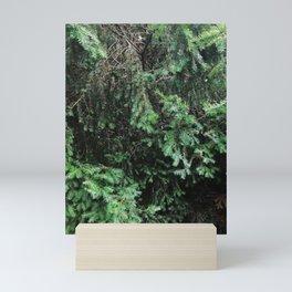 Spruce tree 2 Mini Art Print