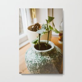 Lemon Tree Saplings Metal Print