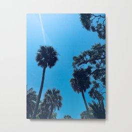 Palms in St. Augustine Metal Print