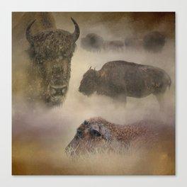 Buffalo Dreams - Wildlife  Canvas Print