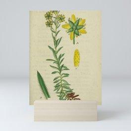 Flower saxifraga aizoides10 Mini Art Print