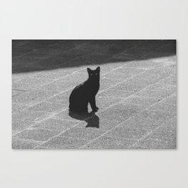 Bat-cat Canvas Print