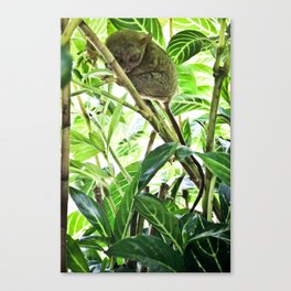 Tarsier Canvas Print
