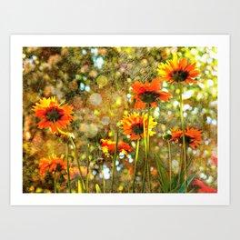 Coreopsis Sunburst Art Print
