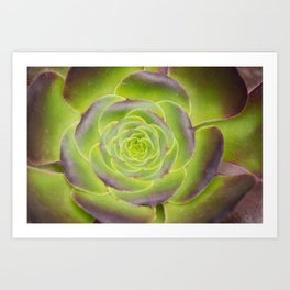 Succulent Glow Art Print