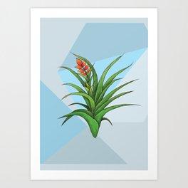Geometric Air Plant Art Print