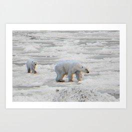 Polar Bears Art Print