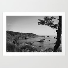 Patricks Point State Park Art Print