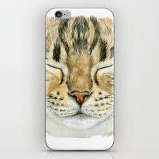 Sleeping Tabby Cat  830 iPhone & iPod Skin