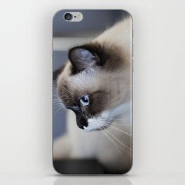 Ragdoll Cat iPhone Skin