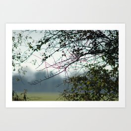 Bare branches Art Print