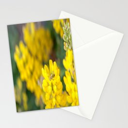 Yellow Lupin and a Ladybug Stationery Cards