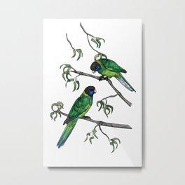 Ringneck Parrots Metal Print