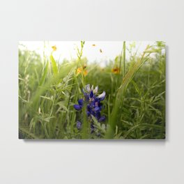 Blue Bonnets Metal Print