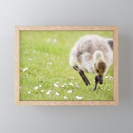 Baby Canada Goose Framed Mini Art Print