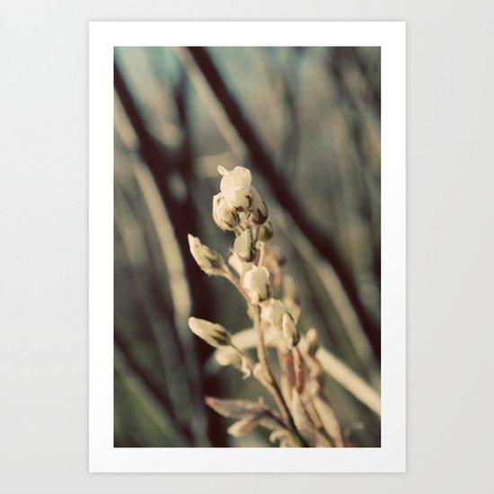 First Bloom Art Print