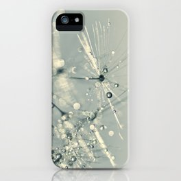 dandelion silver VIII iPhone Case