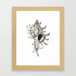 Shell 01 Framed Art Print